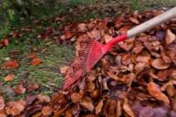 raking leaves