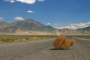 600px-tumbleweed-on-highway
